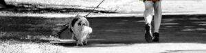 Walk Your Dog - Off Leash K9 Training